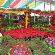 26ª Expo Aflord começou em Arujá  no último final de semana