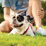 Pets podem ter diabete?