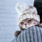 Inverno e as doenças respiratórias em pets