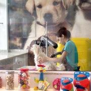 Higiene do seu pet: tão importante quanto a nossa