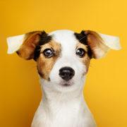 Quatro dicas para prevenir doenças oculares em seu pet