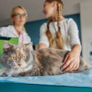 Como cuidar da imunidade dos pets?